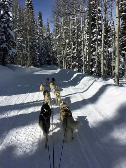 8 dog team, soapstone pass